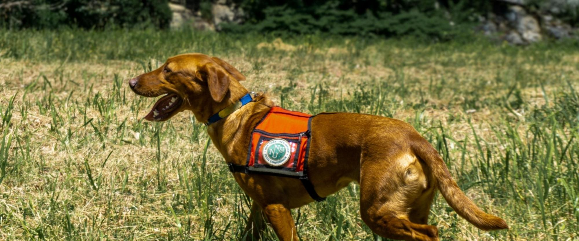 Dia the Conservation Detection Dog. Photo by Arden Blumenthal.