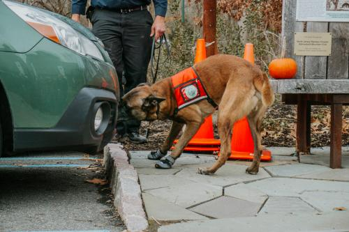 Conservation dogs spotted lanternfly car search. Photo by Arden Blumenthal.