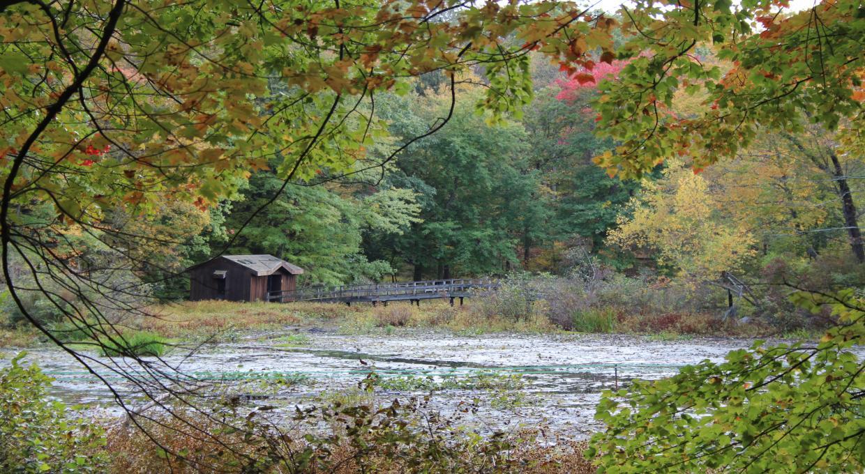 Blue Trail, Teatown Lake Reservation - Photo Patricia Nicolini