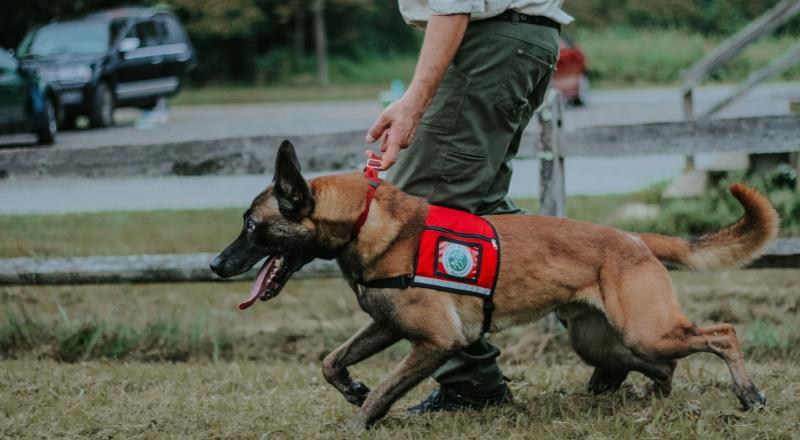 Conservation Dog Fagen + Handler Joshua Beese. Photo by Arden Blumenthal.