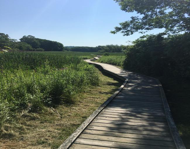 New Jersey Boardwalk on the Appalachian Trail - Photo Moe Lemire